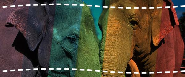 Os elefantes nunca esquecem